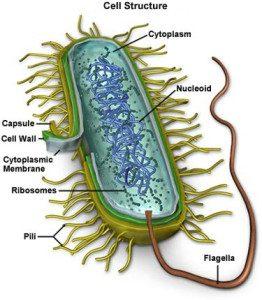 mycoplasma-trustedhealthadvisorsdotcom